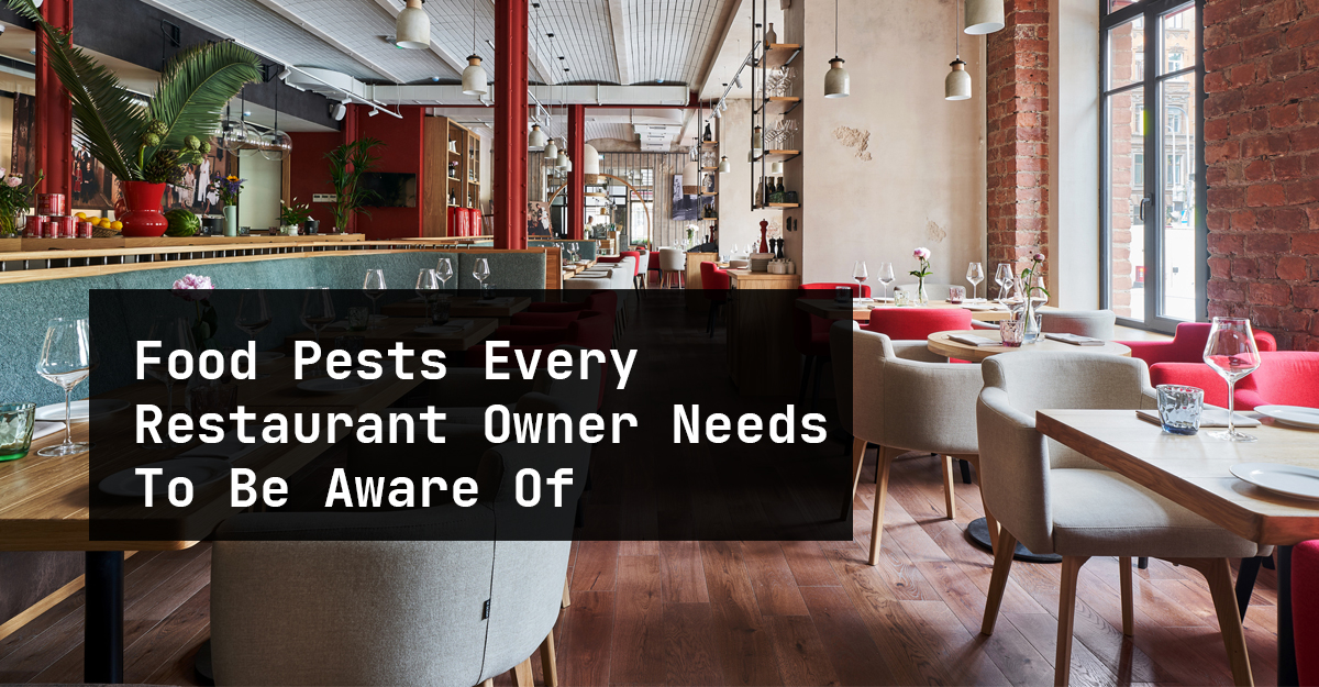 Food Pests Every Restaurant Owner Needs To Be Aware Of In Oakville, Toronto, Mississauga, Milton, Brampton